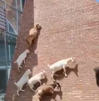 goats_going_up.png