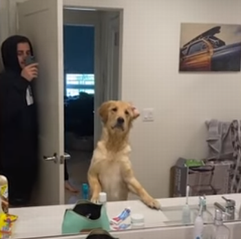 dog_confused_by_mirror.png