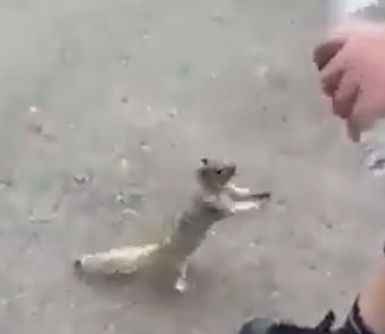 Squirrel_asking_for_water.png