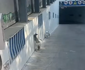 Cats_walking_together.png
