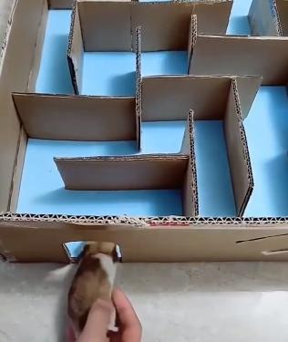 Hamster_solve_a_maze.png