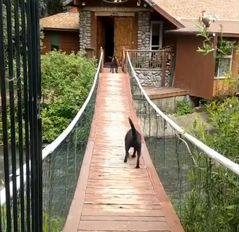 dog_learns_how_to_cross_bridge.png