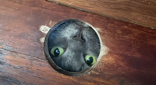 kitty_plays_through_hole.png