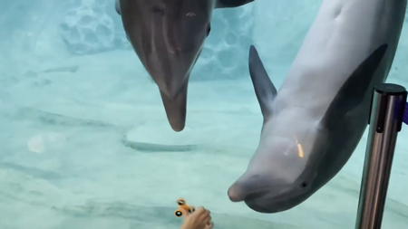 Dolphins_Fascinated.png