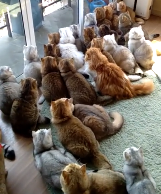 cat_house.png