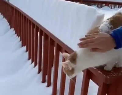 froze_the_cat.png