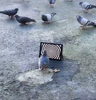 pigeon_trap.png