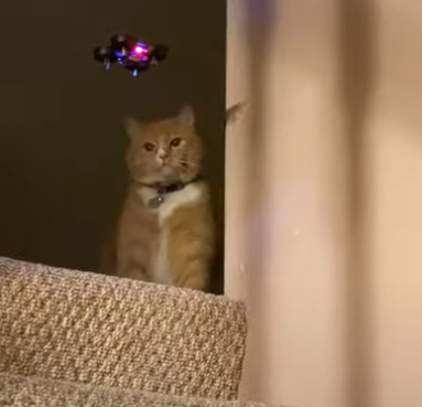 Kitty_Swipes_at_Drone.png