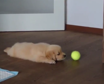 Lazypup.png