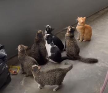 CatsBotheredbyBird.png