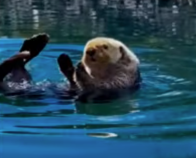 most_relaxed_otter.png