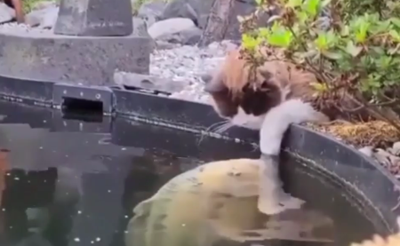 cat_and_fishes.png