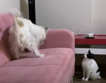 cat_chastises_dog.png