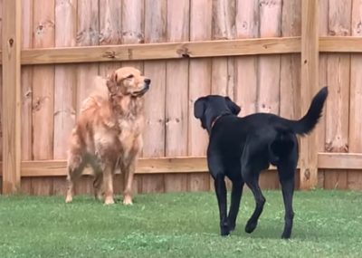 Sneaky_Lab.png