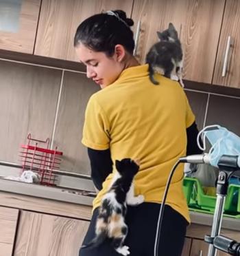 kittens_climb_human.png