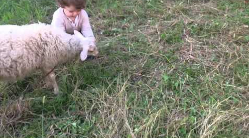baby_and_sheep.png