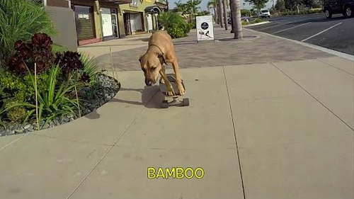 bamboo_the_dog.png