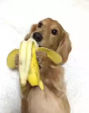 banana_vs_dog.png