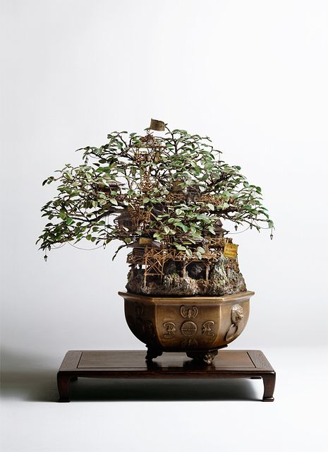 bonsai_tree_house_02.jpg