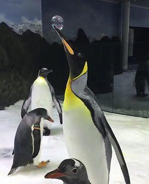 bubble_poping_king_penguin.jpg