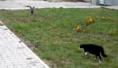cat_and_dog_showdown.jpg