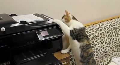 cat_and_printer_02.jpg