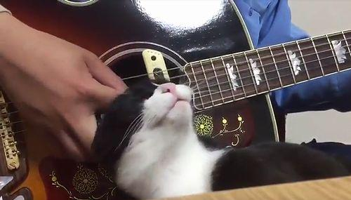 cat_loves_guitar.jpg