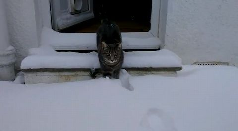 cat_meets_snow.jpg