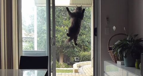 cat_onto_security_door.jpg