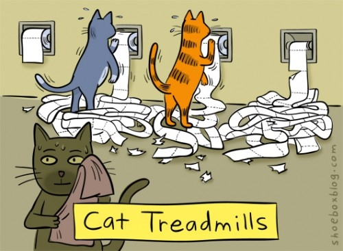 cat_treadmill.jpg