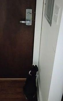 cat_try_to_open_door.jpg