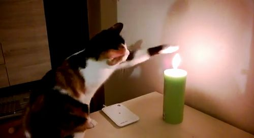 cat_vs_candle.jpg