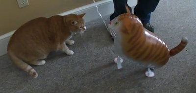 cat_vs_cat_balloon.jpg