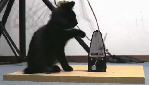 cat_vs_metronomes.png