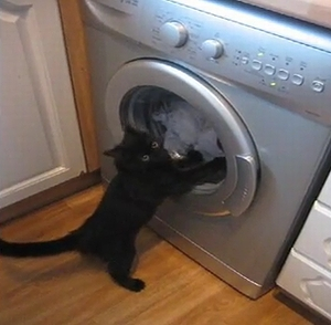cat_washing_machine.jpg