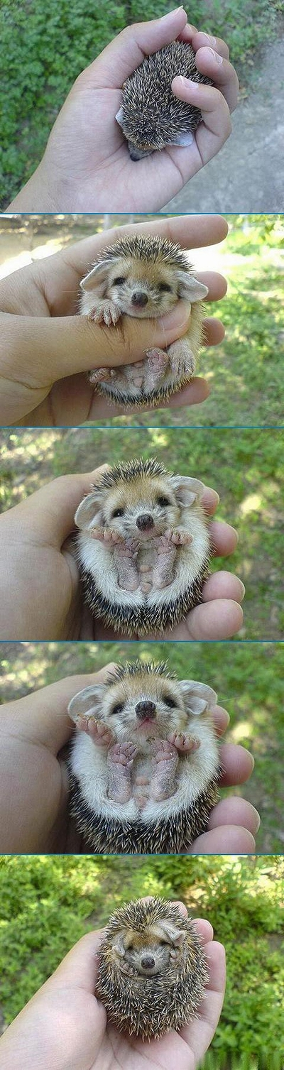 cute_Hedgehog.jpg
