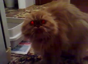 demon_cat.jpg