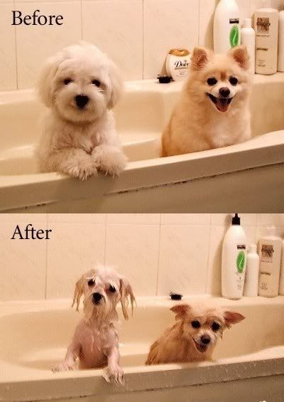 dog_before_after.jpg