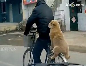 dog_ride_on_bike.jpg