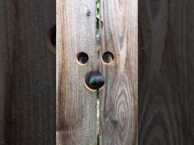 peeking_dog.png