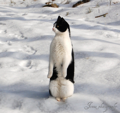 penguin_cat_02.jpg