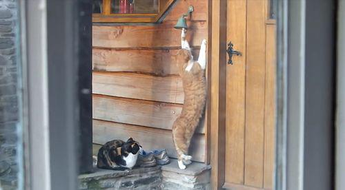 polite_cat_rings_doorbell.jpg