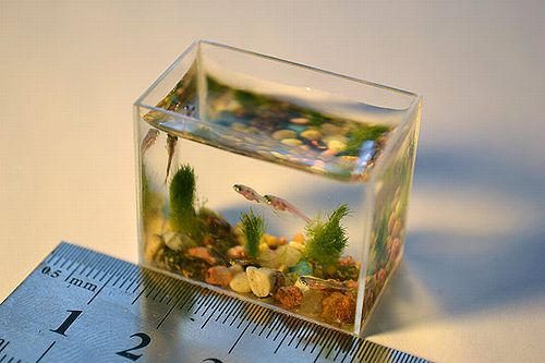 smallest_aquarium_02.jpg