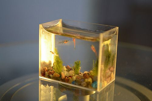smallest_aquarium_04.jpg