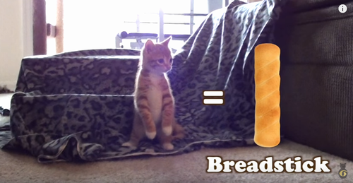 when_cats_look_like_bread.png